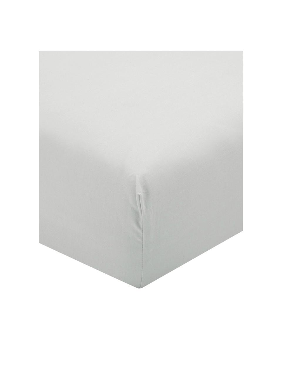 Lenzuolo con angoli in percalle grigio chiaro Elsie, Grigio chiaro, 180 x 200 cm