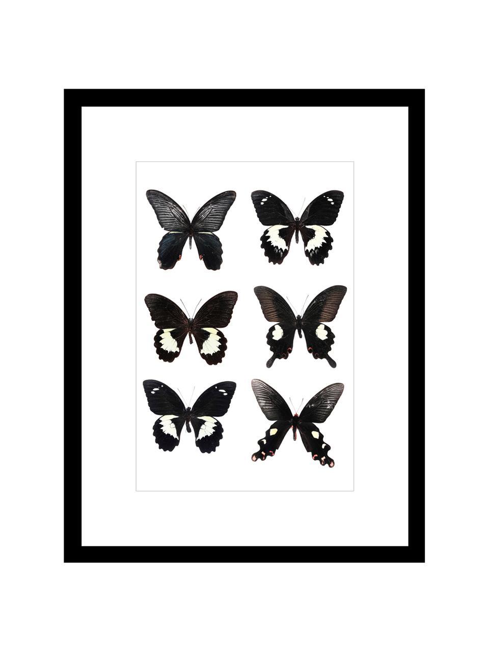 Zarámovaný digitální tisk Butterflies Dark, Černá, bílá