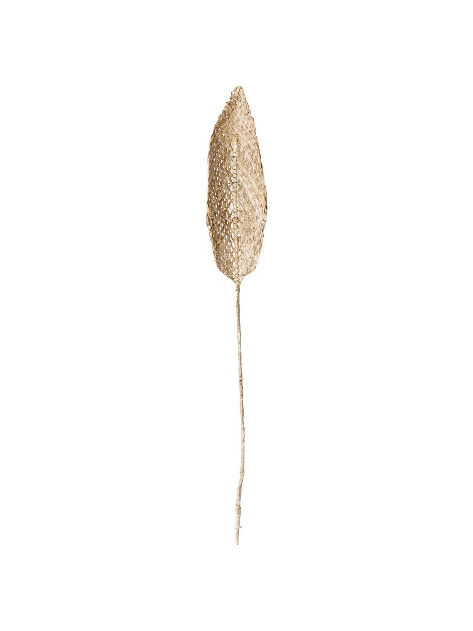 Oggetto decorativo Planta de Praia, Foglie di banana, intrecciate, Beige, L 15 x A 80 cm