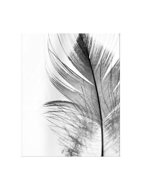 Stampa digitale incorniciata Feather, Immagine: stampa digitale su carta, Cornice: materiale sintetico (PU), Retro: pannelli di fibre a media, Immagine: nero, bianco cornice: nero, Larg. 30 x Alt. 40 cm
