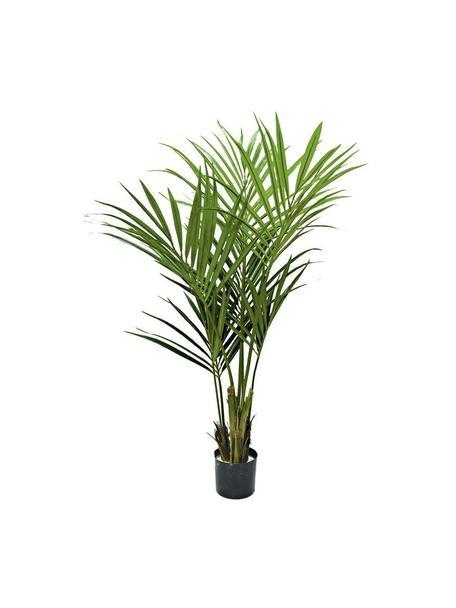Planta artificial Kentia, Poliéster, látex, polipropileno, alambre de metal, Verde, marrón, Ø 50 x Al 120 cm