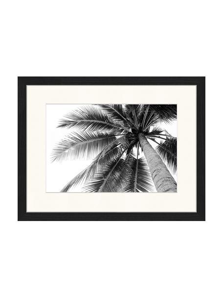 Gerahmter Digitaldruck Coconut Palm Tree, Bild: Digitaldruck auf Papier, , Rahmen: Holz, lackiert, Front: Plexiglas, Schwarz, Weiß, 43 x 33 cm