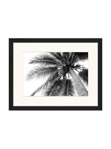 Impresión digital enmarcada Coconut Palm Tree, Negro, blanco, An 43 x Al 33 cm
