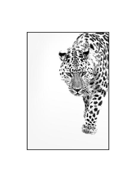 Gerahmter Digitaldruck White Leopard, Bild: Digitaldruck auf Papier (, Rahmen: Hochdichte Holzfaserplatt, Schwarz, Weiss, 30 x 40 cm