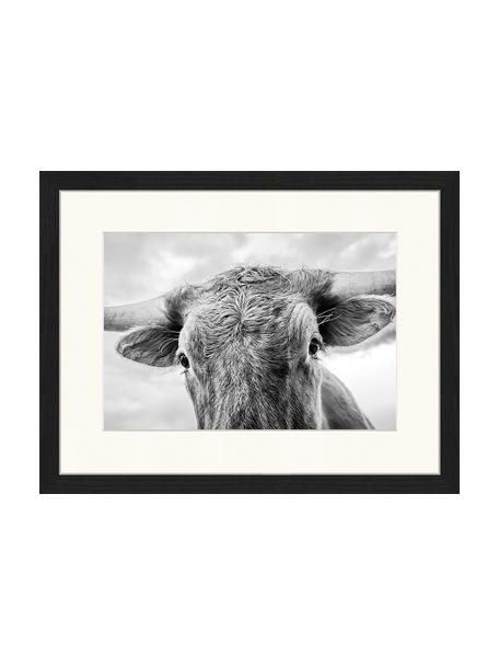 Impresión digital enmarcada Texas Longhorn Steer In Rural Utah, Negro, blanco, An 43 x Al 33 cm