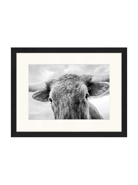 Ingelijste digitale print Texas Longhorn Steer In Rural Utah, Afbeelding: digitale print op papier,, Lijst: gelakt hout, Zwart, wit, 43 x 33 cm