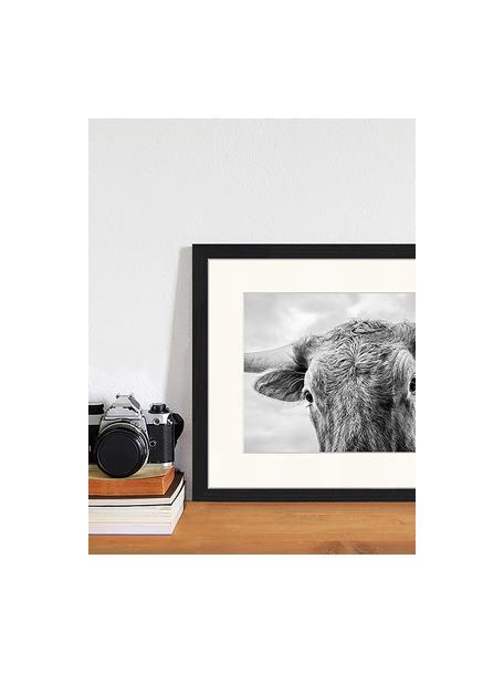 Impresión digital enmarcada Texas Longhorn Steer In Rural Utah, Negro, blanco, An 43 x Al 33 cm