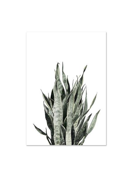 Poster Sanseviera, Digitaldruck auf Papier, 200 g/m², Weiß, Rosa, Grün, 21 x 30 cm