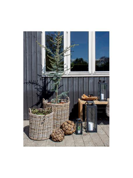Set de cestas para plantas de ratán Indo, 2pzas., Marrón, Set de diferentes tamaños
