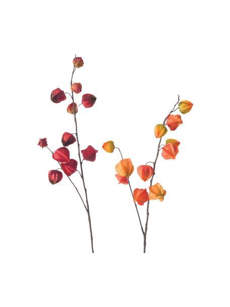 Set 2 fiori artificiali Physalis, Materiale sintetico, Arancione, rosso, marrone, Lung. 90 cm