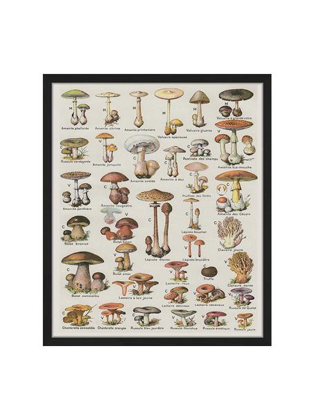 Ingelijste digitale print Mushroom Vintage Poster, Afbeelding: digitale print op papier,, Lijst: gelakt hout, Multicolour, 53 x 63 cm