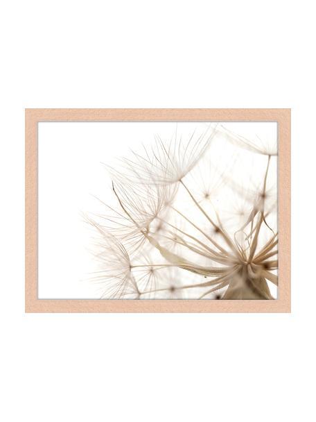 Ingelijste digitale print Flora Of Gran Canaria, Afbeelding: digitale print op papier,, Lijst: gelakt hout, Multicolour, 43 x 33 cm