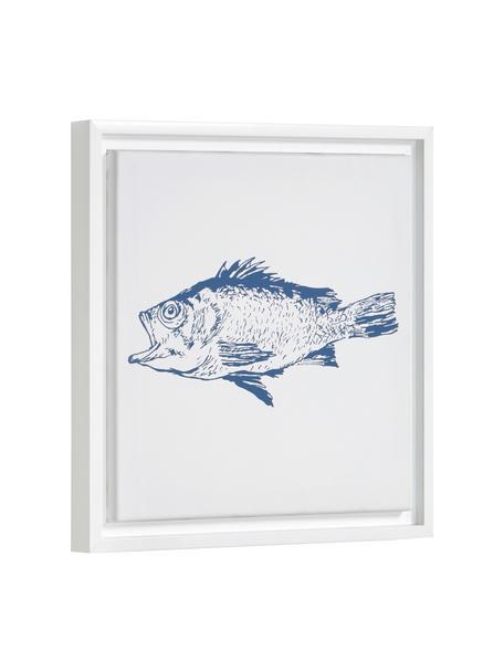 Ingelijste digitale print Lavinia Fish, Lijst: gecoat MDF, Afbeelding: canvas, Wit, blauw, 30 x 30 cm