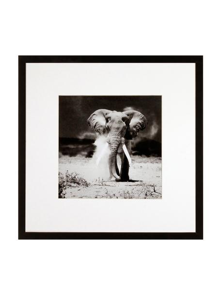 Gerahmter Digitaldruck Elephant, Bild: Digitaldruck, Rahmen: Kunststoffrahmen mit Glas, Schwarz,Weiß, 40 x 40 cm