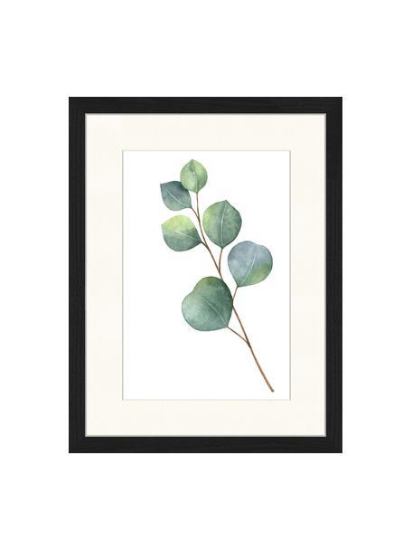 Stampa digitale incorniciata Eucalyptus II, Immagine: stampa digitale su carta,, Cornice: legno verniciato, Immagine: verde, bianco Cornice: nero, Larg. 33 x Alt. 43 cm