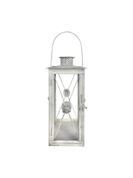 Laterne Lion, Glas, Stahl, beschichtet, Grau, 19 x 37 cm