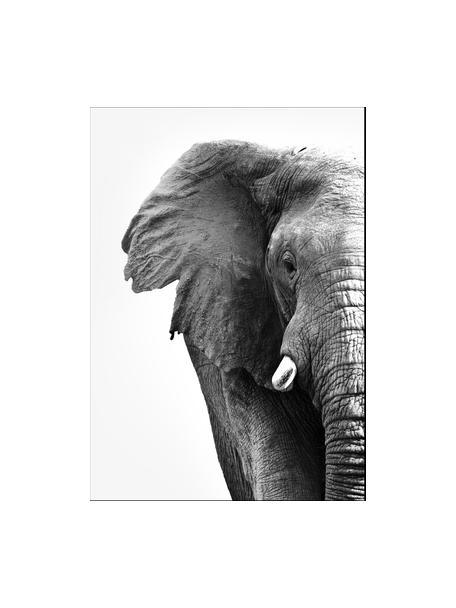 Gerahmter Digitaldruck White Elephant, Bild: Digitaldruck auf Papier (, Rahmen: Hochdichte Holzfaserplatt, Schwarz, Weiß, 30 x 40 cm