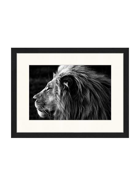 Impresión digital enmarcada Lose-Up Of A Lion, Negro, blanco, An 43 x Al 33 cm