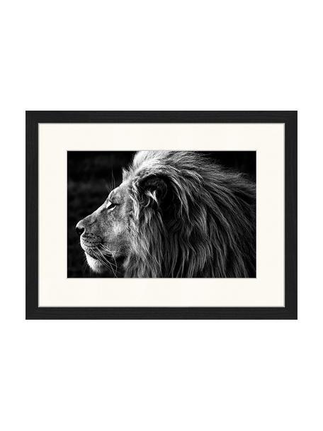 Ingelijste digitale print Lose-Up Of A Lion, Afbeelding: digitale print op papier,, Lijst: gelakt hout, Zwart, wit, 43 x 33 cm