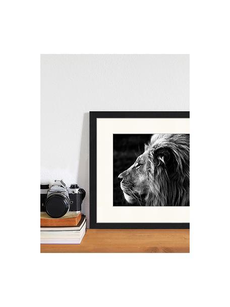 Stampa digitale incorniciata Lose-Up Of A Lion, Immagine: stampa digitale su carta,, Cornice: legno, verniciato, Nero, bianco, Larg. 43 x Alt. 33 cm