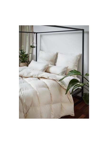 Feder-Kopfkissen Comfort mit Bio-Daunen und Bio-Baumwolle, weich, Bezug: 100% Bio-Baumwolle, GOTS , Beige, 40 x 80 cm