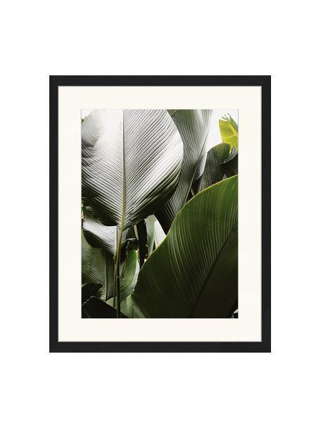 Stampa digitale incorniciata Palm Tree Leaves, Immagine: stampa digitale su carta,, Cornice: legno, verniciato, Multicolore, Larg. 43 x Alt. 53 cm