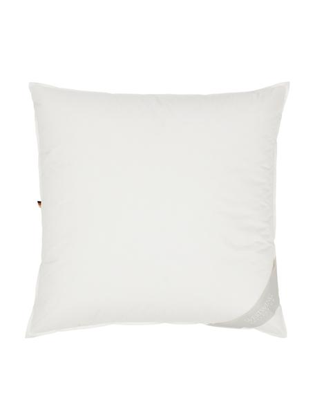 Feder-Kopfkissen Comfort mit Bio-Daunen und Bio-Baumwolle, weich, Bezug: 100% Bio-Baumwolle, GOTS , Beige, 80 x 80 cm