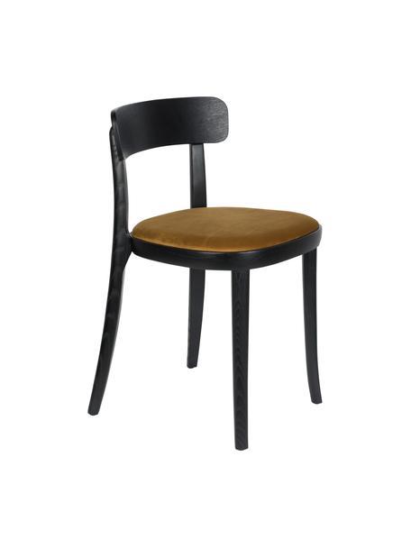 Sedia in legno con sedile in velluto Brandon, Rivestimento: velluto 100% poliestere C, Struttura: legno di frassino massicc, Seduta: compensato, Giallo, Larg. 46 x Prof. 45 cm