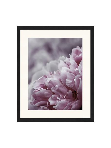 Gerahmter Digitaldruck Pink Flower, Bild: Digitaldruck auf Papier, , Rahmen: Holz, lackiert, Front: Plexiglas, Mehrfarbig, 43 x 53 cm
