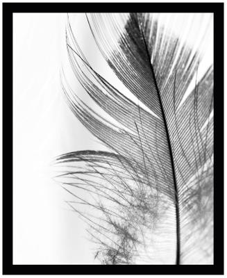 Impresión digital enmarcada Feather