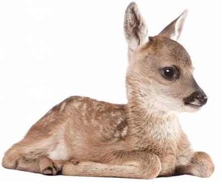 Sticker mural Deer