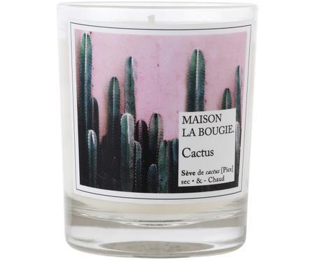 Świeca zapachowa Cactus (jagodlin wonny, goździk & tuberoza)