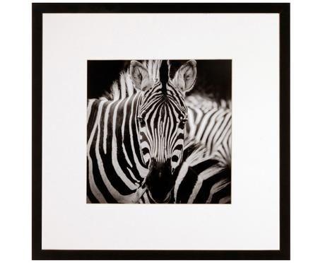 Ingelijste digitale print Zebra