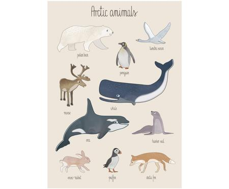 Plakat Arctic Animals