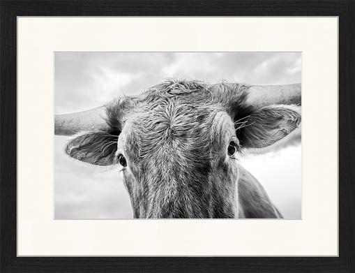 Impresión digital enmarcada Texas Longhorn Steer In Rural Utah