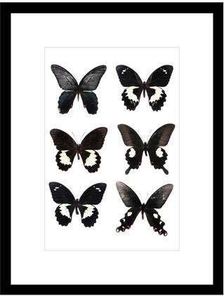 Lámina decorativa Butterflies Dark