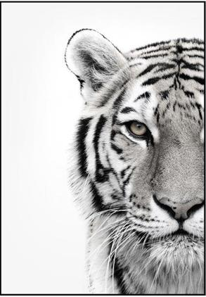 Impresión digital enmarcada White Tiger