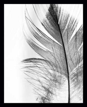 Gerahmter Digitaldruck Feather
