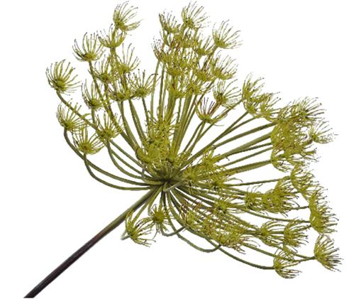 Sztuczny kwiat pora Lena, Poliester, tworzywo sztuczne, metal, Odcienie zielonego, D 102 cm