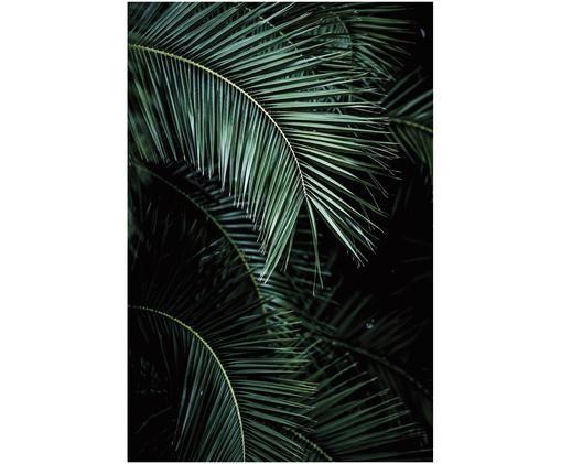 Fototapete Palms, Schwarz, Grün