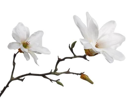 Sztuczny kwiat magnolii Magdalena, Tworzywo sztuczne, Biały, brązowy, D 230 x W 10 cm