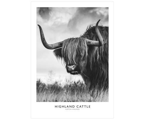Poster Highland Cattle, Stampa digitale su carta opaca  (180 g/m²), Bianco, grigio, nero, Larg. 21 x Alt. 30 cm