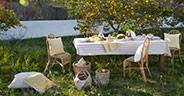Cytrynowy ogród