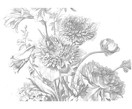 Fotomural Engraved Flowers