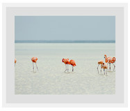 Ingelijste digitale print Flamingos