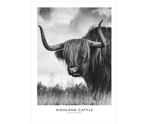 Poster Highland Cattle